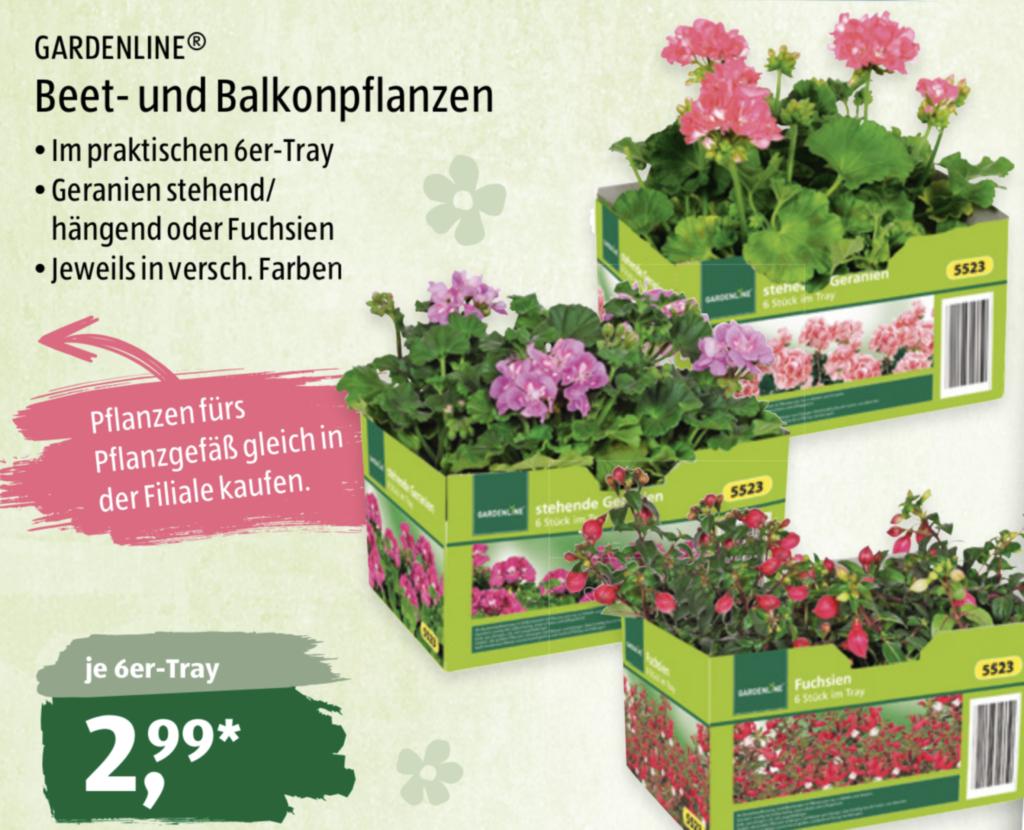 Die Pflanzendiscounter - Supermarkt Inside